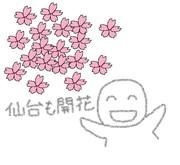 サクラ開花.jpg